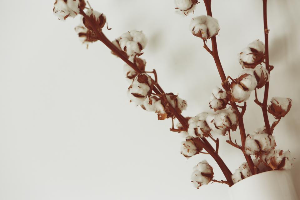 2020全球十大棉花生产国