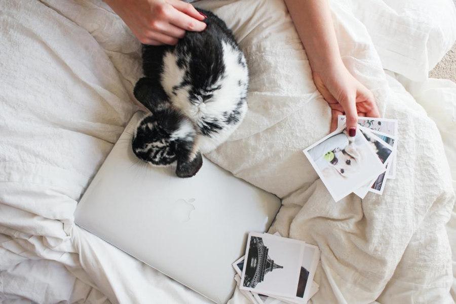 Pinterest是世界上最大的图片社交分享网站
