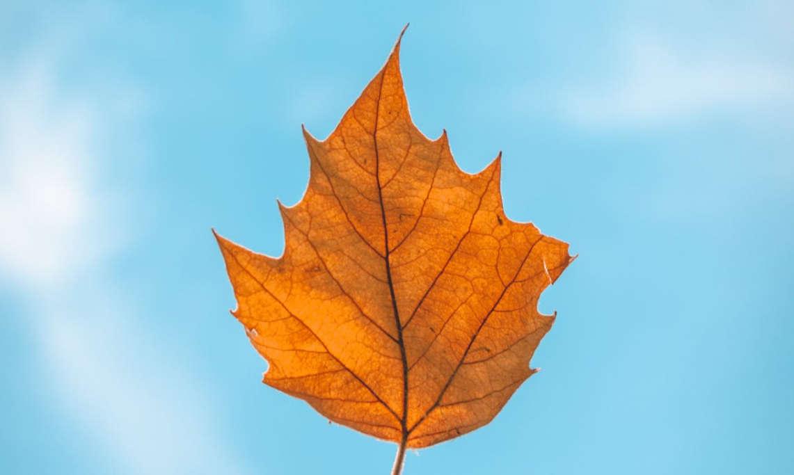 超文艺的秋天文案 有关秋天的句子文案