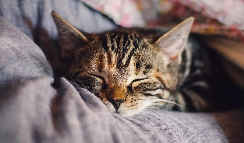 改善睡眠的20个小技巧